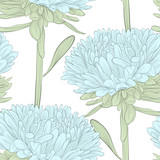 Beautiful seamless background with blue flowers aster on white