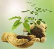concept échange de plantes