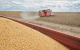 Harvesting of soy bean field
