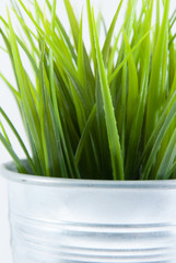 Grass in Steel Pot