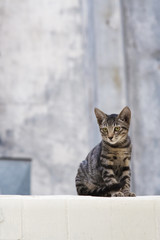 Young Cat sitting on a wall