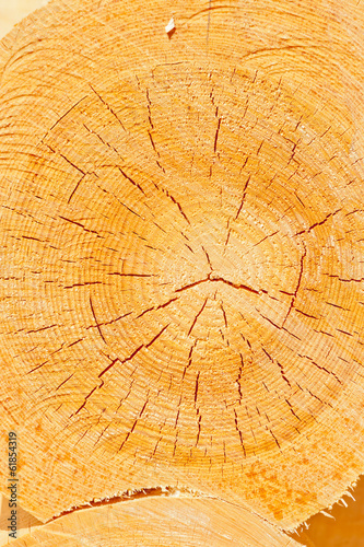 cross-section of a tree close up