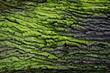 green bark texture - 61855396