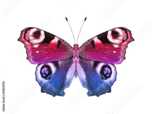 Deurstickers Vlinder Tagpfauenauge blau rot