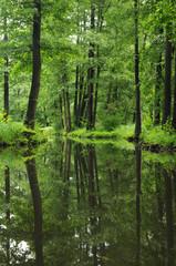 Im Spreewald