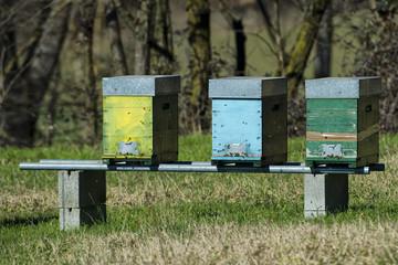 Wood bee hive