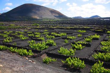 vineyard, Lanzarote