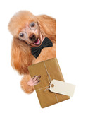 Dog with brown paper parcels delivery