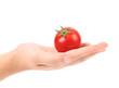 Fresh tomato on hand.