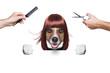 hairdresser dog