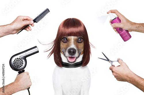 canvas print picture hairdresser dog