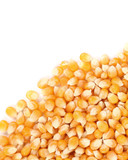 Closeup of corn grains.