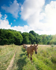 A herd of horses moves along the field