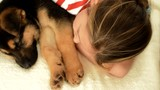 beautiful girl and sleeping Shepherd puppy, top view