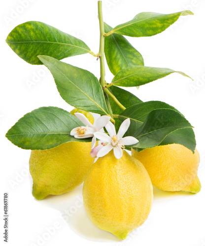 Lemon and blossom
