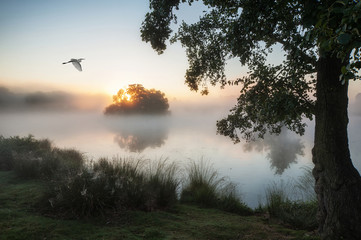 Beautiful Autumnal landscape image of birds flying over misty la
