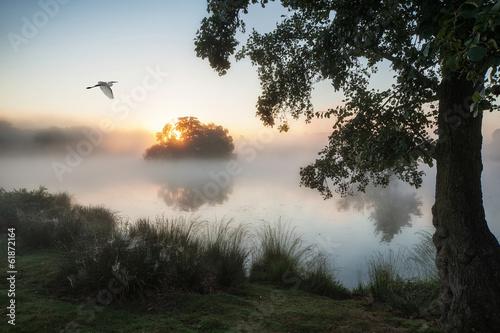 Beautiful Autumnal landscape image of birds flying over misty la © veneratio
