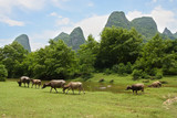 Herd pasture in beautiful landscape of china