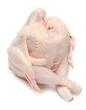 Sitting chicken