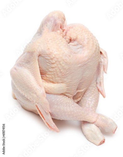 Sitting chicken