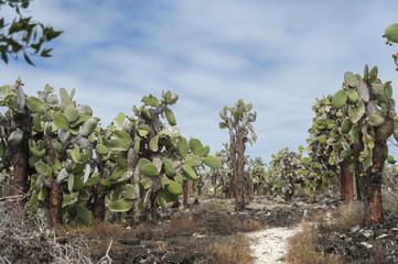 flora delle galapagos