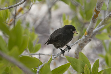 fauna delle galapagos