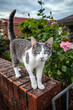 Tabby and White Cat at the Gate of a Garden