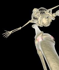 Ginocchio legamenti tendini ai raggi x