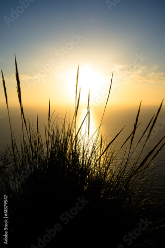 canvas print picture Reeds at sunrise