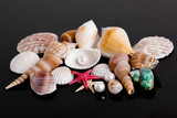 The exotic sea shell . treasure from the sea on black  backgroun