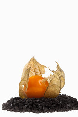 Wide open Physalis fruit