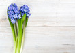 blue hyacinth on wooden table and copy-space for your text