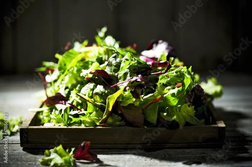 gemischter Salat, Blattsalat, Lollo Rosso, Radiccio Rosso, Rucol