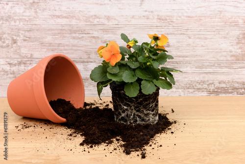 canvas print picture Blume umpflanzen