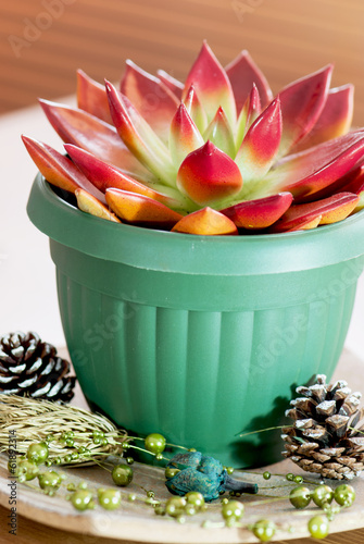 Red succulent in a green flowerpot