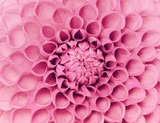 Fototapety closeup flower