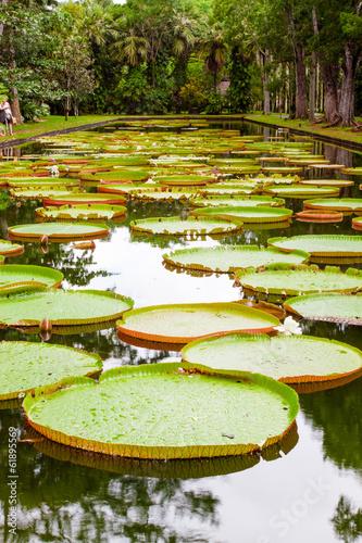 Aluminium Water planten bassin aux nénuphars géants, Victoria Amazonica, Maurice