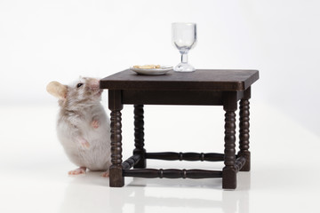 Little mouse dines at the table