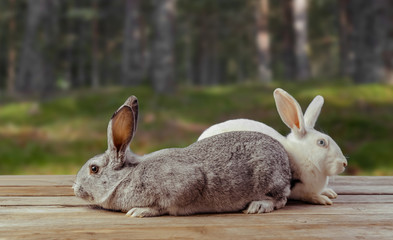 Two rabbits sit on a wooden table