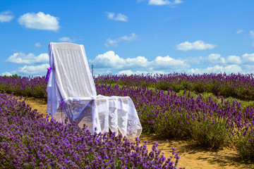 Chair in lavander field