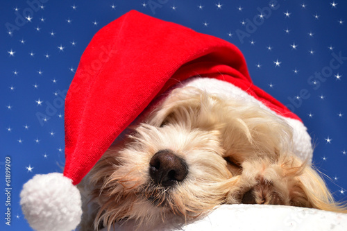 canvas print picture Christmas dog