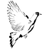 Flying dove cartoon