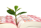 Leaf bud growing out of a book covered with Chinese money