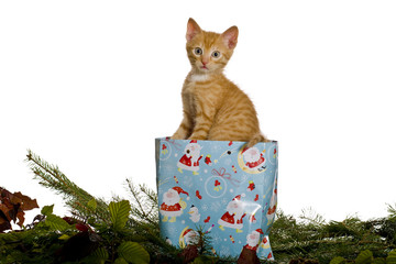 Katze als Geschenk in einer Tüte