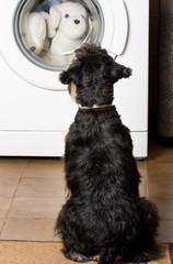 Dog looking at washing machine