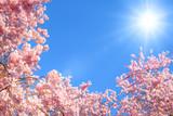 Kwitnące drzewa na tle słońca - 61910981