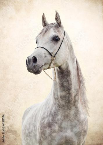 portrait of gray beautiful arabian stallion at art background © anakondasp