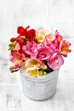 Bouquet of colorful freesia flowers in silver bucket