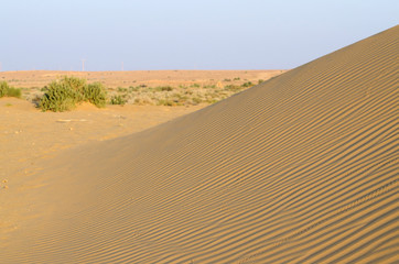 Beautiful dunes of Thar desert during sunset,Rajasthan,India
