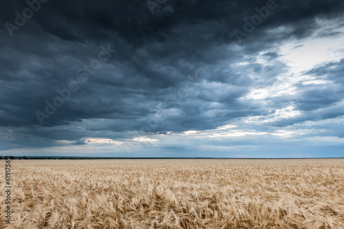 dark dramatic field and sky landscape